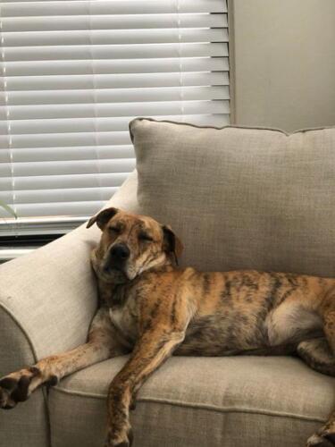 Семья потеряла собаку, но зря они плакали. Один звонок в дверь, и пара узнала, чем пёселю ноc на самом деле