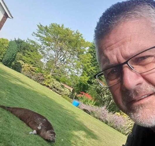 Пенсионерка из Англии обнаружила в своём саду тюленя
