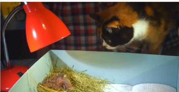 Ютубер вывел цыплёнка в стеклянном стакане. Осталось придумать пернатому кличку