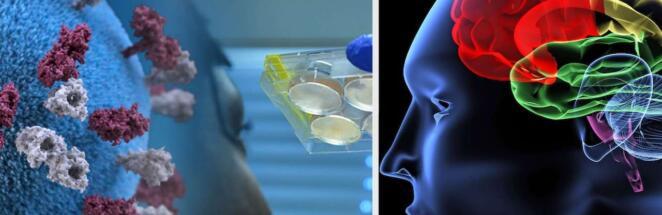Учёные подтвердили, что коронавирус снижает уровень интеллекта