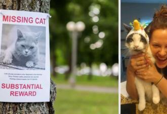 Хозяйка узнала, что кот жил на две семьи. Питомца выдало фото в розыске пропавших животных