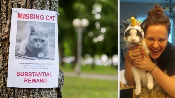 Хозяйка узнала, что кот жил на две семьи. Мохнатого выдало фото в розыске пропавших животных