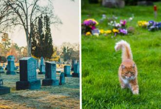 Кошка каждый день сбегает из дома на кладбище и утешает скорбящих