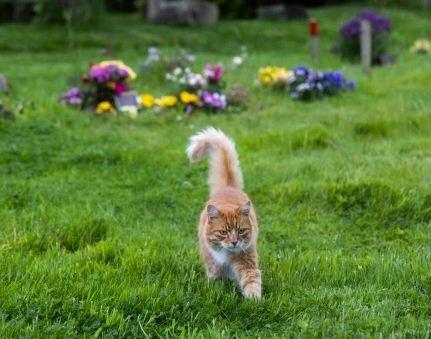 Кошка каждый день ходит на кладбище утешать людей, а хозяева шутят, что это её работа