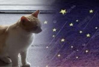 Мама сказала вслух, что хочет рыжего кота с белыми пятнами. Через неделю такой бродяга пришёл в её двор сам