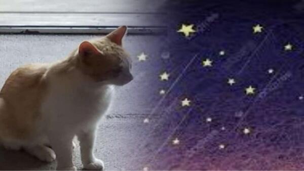 Кот сам пришёл к хозяйке, а та в слёзы — именно его она и хотела. Магия? Нет, правильно загаданное желание