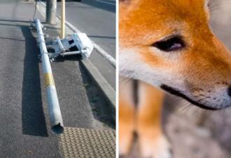 Светофор упал, и полиция винит собак, метивших его. Опыт подтвердил — псы портят города
