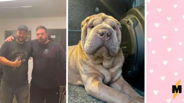 Наркоманка украла пса у хозяина, а он её нашёл и вместо мести оплатил ей реабилитацию