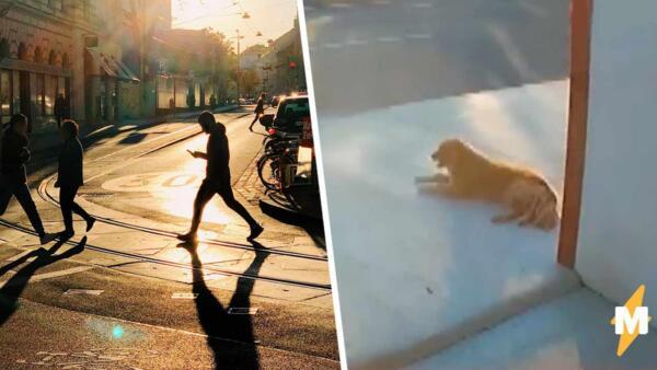Мистер Неудача vs пёс с бесконтактным кусем, кто кого? Фура! Что? Да, нет времени объяснять, смотри видео