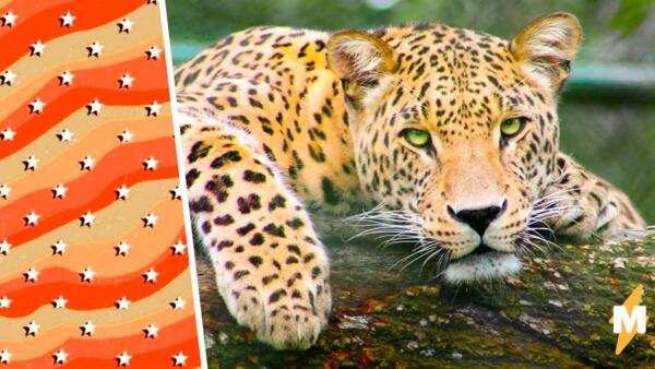 Леопард провалился в колодец и превратился в мем. Выражение его мордочки знакомо каждому человеку на Земле