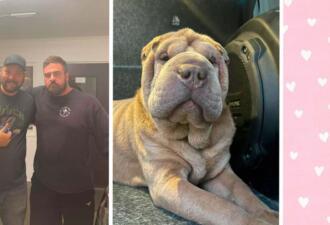 Наркозависимая украла пса у хозяина, а он её нашёл и вместо мести оплатил ей реабилитацию