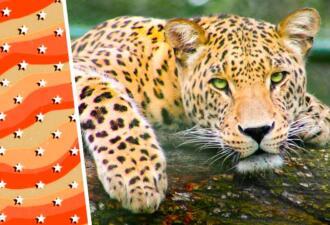 Леопард провалился в колодец и рассмешил спасателей. Из фото с испуганной кошкой мы сделали пять мемов