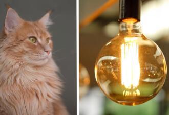 Как погасить свет, не вставая с дивана. Нужно светить лазерной указкой на выключатель и ждать кота