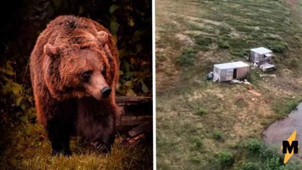 Охотник не спал несколько дней, потому что неделю сражался с медведем (его спасли)