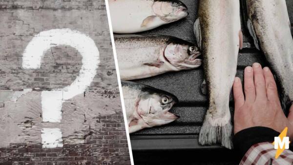 Что за тренд «Вы продаёте рыбов? Нет, просто показываю» и откуда он взялся