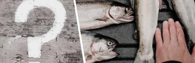 Что за тренд «Вы продоёте рыбов? Нет просто показываю» и откуда взялся мем с котами