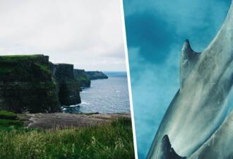 Отдыхающие на пляже Ирландии сняли видео плывущих рядом с туристами акул