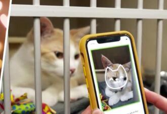 Распознать настроение своего кота можно с помощью приложения Tably