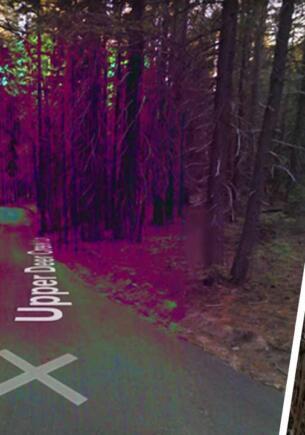 Пользователь Google Maps обнаружил в США лес с фиолетовыми деревьями