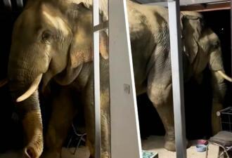 В Таиланде голодный дикий слон вломился в чужой дом во второй раз. Теперь его привлёк кошачий корм