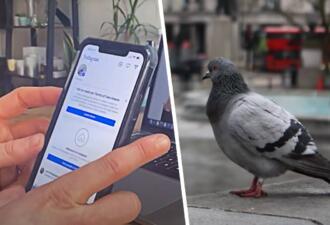 Ютуберы создали фейкового блогера-голубя и получили контракты на рекламу