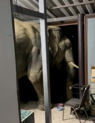 Помните, как слон сломал стену, навёл суету в новостях и ушёл? Вы не поверите, что он сделал через неделю
