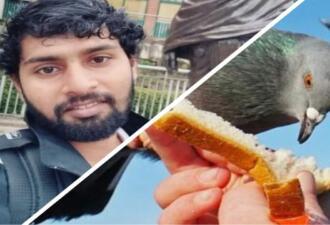 Студент получил штраф за то, что покормил голубя на улице