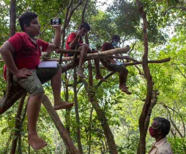 «Школьник в болоте» — версия 2.0. Так дети на Шри-Ланке учатся на деревьях, возрождая мем