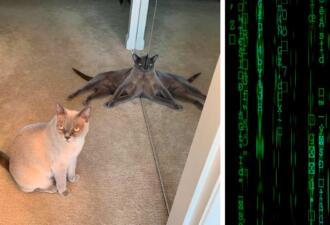 Кот прилёг у зеркала, и обман зрения готов. Так родился мем про осьминога в теле кошки