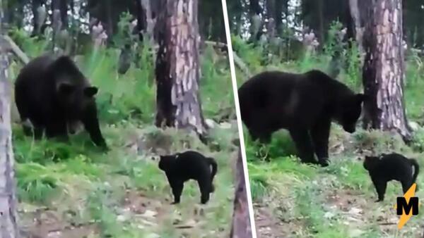 Кот Вася на видео спас хозяев от дикого медведя в Якутии