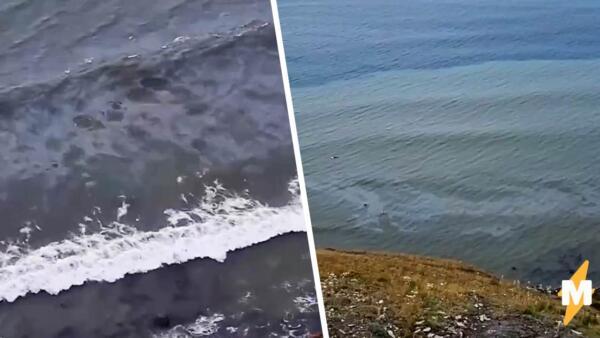 Житель Анапы возле пляжа снял на видео масляное пятно от разлива нефти в Новороссийске