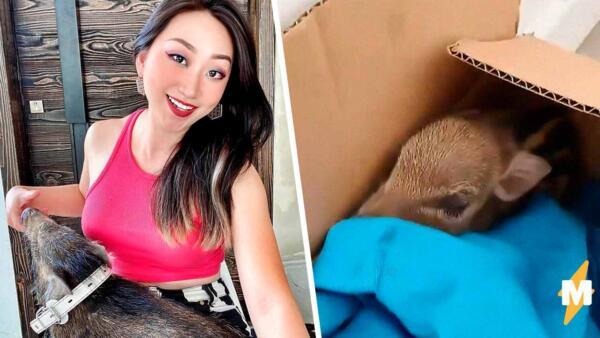 Блогерше под дверь подкинули коробку с диким кабаном, и он вырос в большого свина
