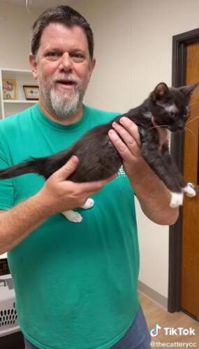 Сотрудник приюта показал, что нужно всегда придерживать кошку за спину, чтобы она не вырывалась