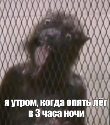 """Новый герой """"Отряда самоубийц"""" Ласка стал мемом, в котором каждый может узнать себя"""