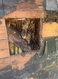 Пара купила дом, в котором уже жило 450 тысяч пчёл 35 лет