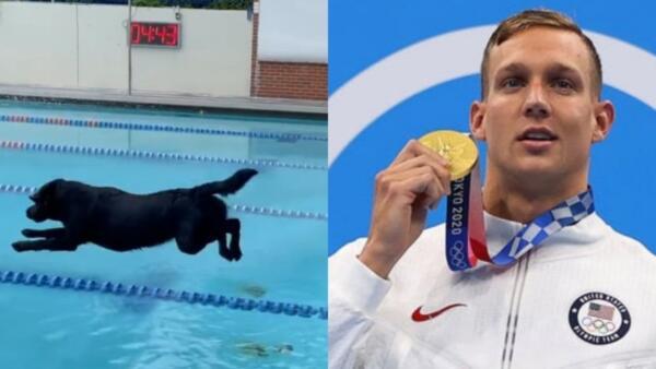 Олимпийский чемпион Калеб Дрессел научил свою собаку плавать не хуже профессионалов