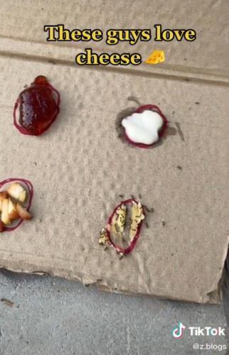 Тиктокерша открыла ресторан для муравьёв, используя картон, маркер и сладости