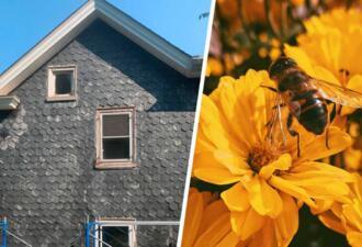 Пара купила дом вместе с 450 тысячами пчёл, поселившихся в здании раньше них