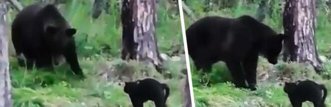 Домашний кот на видео отпугнул медведя от хозяев в Якутии