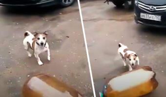 Пивная кега, собака Фродо и громкий хлопок. Как видео со взорвавшейся «баклажкой» и псом стало мемом