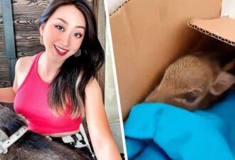 Блогерша вырастила детёныша кабана, подкинутого ей в коробке, в качестве питомца