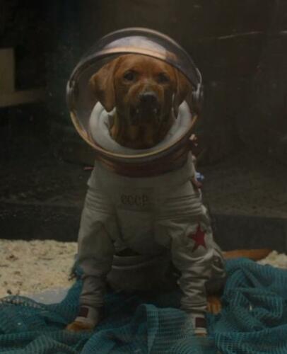 В честь собаки из Marvel или мультфильма. Фанаты гадают, зачем Скарлетт Йоханссон назвала сына Космо
