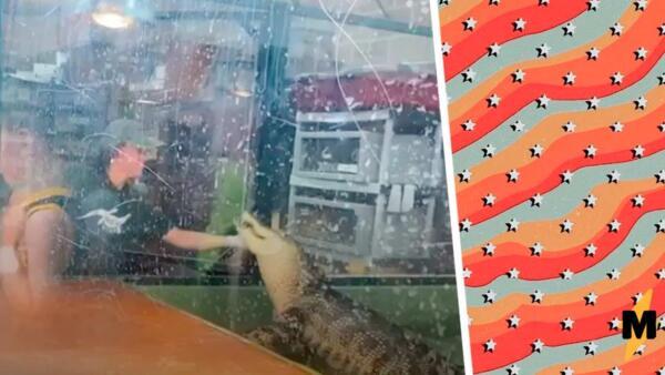 Посетитель зоопарка на видео спас смотрительницу от аллигатора. Мужчина оседлал хищника, но тот не сдавался