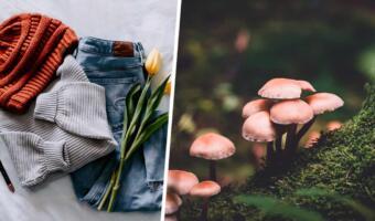 Пользователи соцсетей носят зелёную одежду и продвигают любовь к природе в тренде гоблинкор