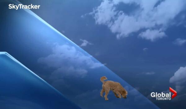 По прогнозу сегодня собака. Растерянный пёс ворвался в эфир невозмутимого метеоролога и рассмешил людей