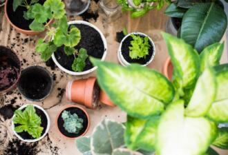 Тест. Можно ли доверить тебе комнатное растение?