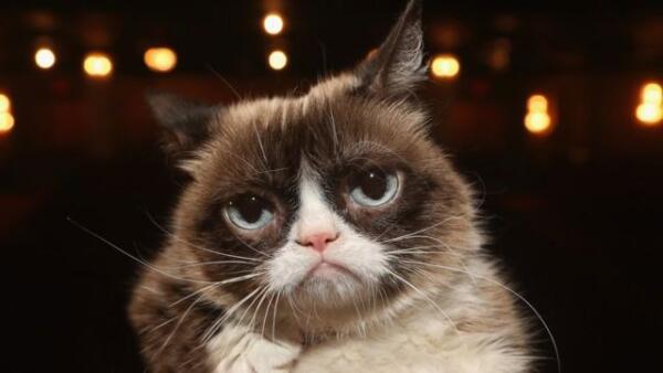 Грустный Эминем стал продавцом макарон в своей закусочной и приуныл на фото. Grumpy Cat из мира рэпа