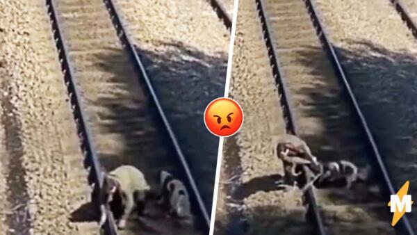 Вирусное видео о спасении собаки от поезда разожгло баталии. В Сети не все верят в трогательную помощь