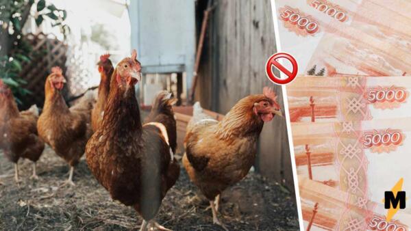 Куры -- виновники всех бед. Запрет на разведение скота на дачах стал поводом для шуток в Сети