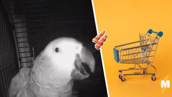 Попугай разговаривает с колонкой